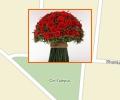 Где заказать доставку цветов в Астане?